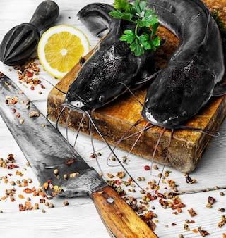Сом сырой рыбы