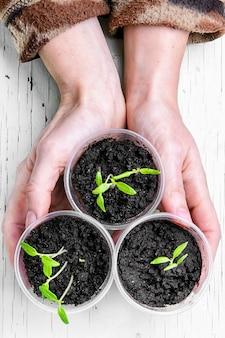 春の植物と手