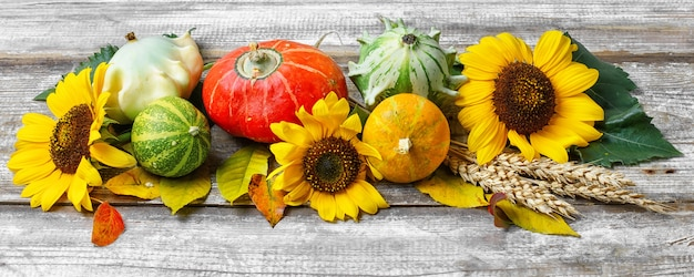 秋の収穫野菜