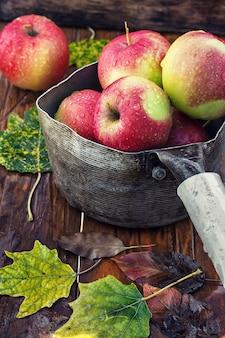 リンゴの秋の収穫