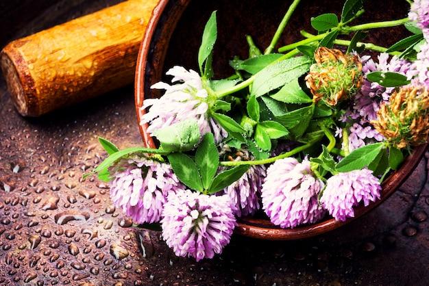 癒しの植物クローバー