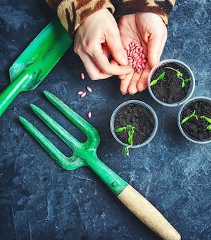 種子春の植物と手