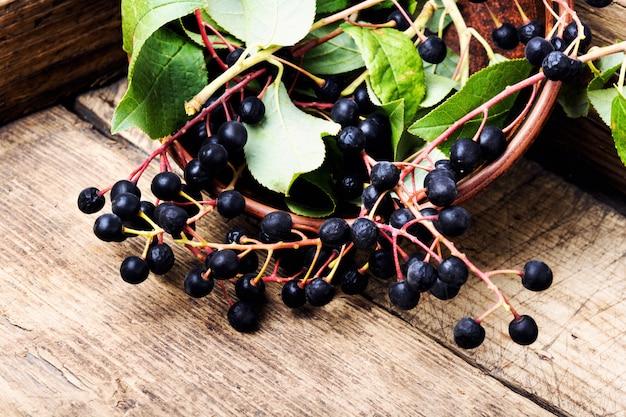 Черноплодная рябина с листьями