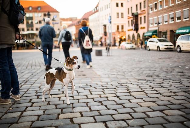市内中心部で犬と一緒に歩く男。美しい目をした孤独な犬がドイツの広場で通行人を見る