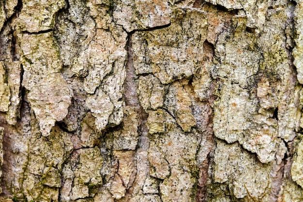 古い木の樹皮。バックグラウンド