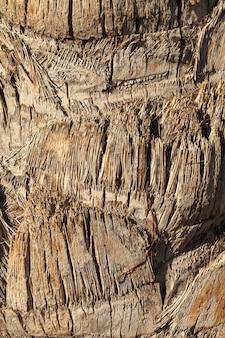 ヤシの木の樹皮の質感。