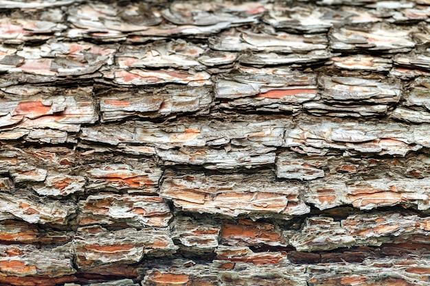 古い木の樹皮。