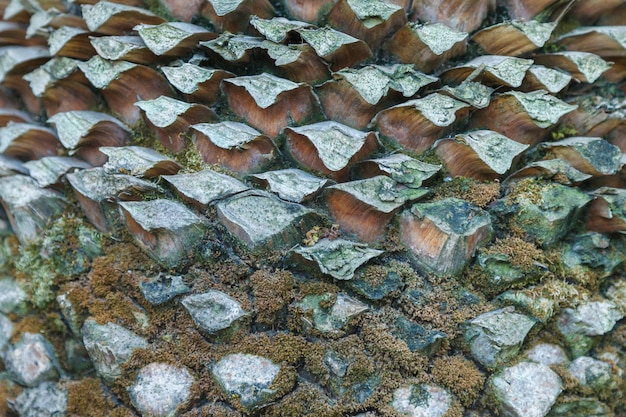 ヤシの木の樹皮の質感。美しい樹皮パターン。閉じる。