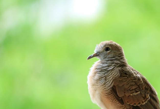 日光の下でリラックスできる愛らしい若い野生のシマウマの鳩