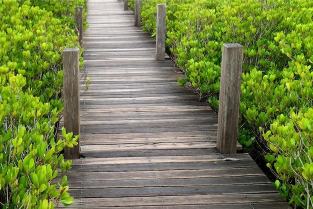 活気に満ちた緑のインドマングローブまたはタイのラヨーン県の拍車をかけられたマングローブ林の木の遊歩道