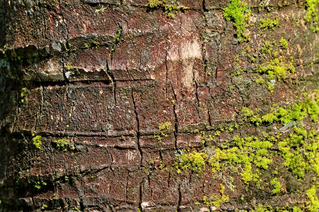 活気に満ちた緑の苔、背景のココヤシの木ラフツリートランクのテクスチャ