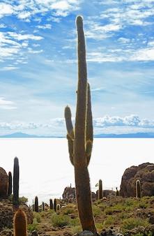 ボリビアのウユニ塩原、インカワシ島の何世紀も前の巨大なサボテン