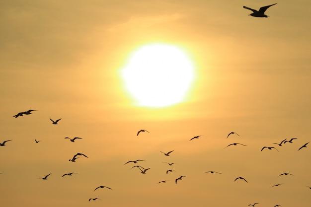 光沢のある昇る太陽、自然の背景に対して飛ぶ多くのカモメ