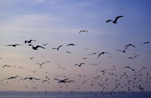 海の上のパステルブルーの朝の空を飛んでいるカモメのシルエット