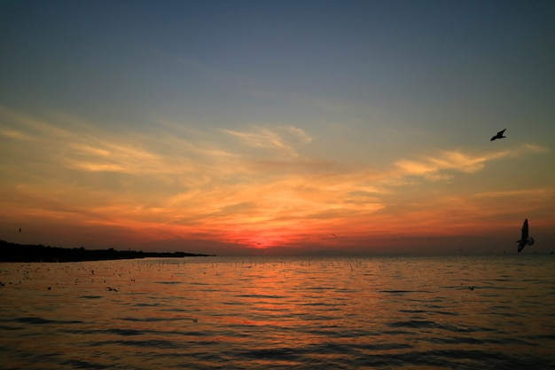 多くのカモメのシルエットと日の出の空の美しい青とオレンジ色