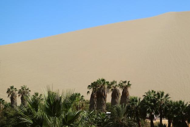 ワカチナ砂漠、イカ、ペルーの砂丘に対してオアシスラグーンの海岸にヤシの木