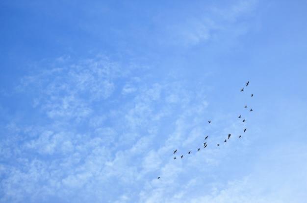 散在の雲と飛んでいる鳥のグループの青い空