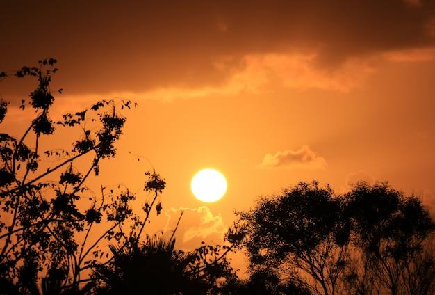 オレンジ色の金曇り空にまぶしい夕日に対する群葉のシルエット