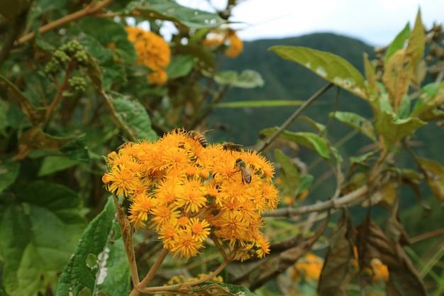 ペルー、マチュピチュ、ワイナピチュ山で蜜を集める多くのミツバチと黄色の野生の花