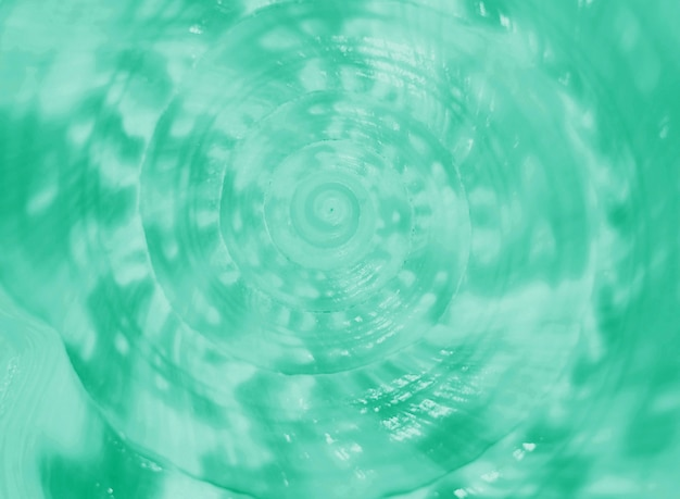 背景のミントグリーン色のスパイラルとキングヘルメットコンク海シェルのテクスチャで引けた