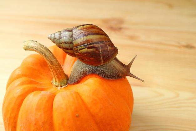 木製のテーブルに鮮やかなオレンジ色のカボチャを登る茶色のストライプシェルカタツムリ