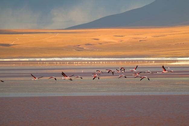 ラグーナコロラダ(レッドラグーン)、アルティプラーノ高原、ボリビアの塩の湖の上を飛んでフラミンゴ