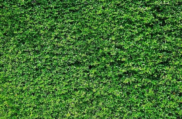 Стена сада покрыта яркой зеленой листвой тропических растений, бангкок, таиланд