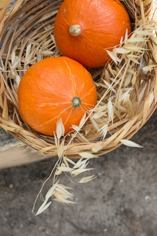Две маленькие ярко-оранжевые фамильные красные тыквы кури в плетеной корзине