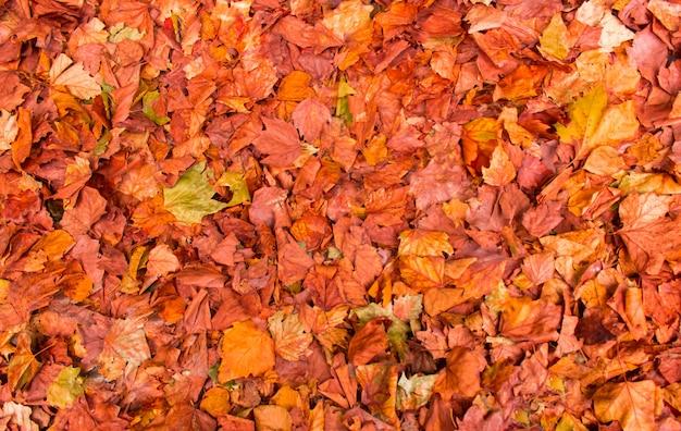 Красочные осенние листья на земле фоне