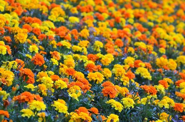 庭にはたくさんの美しい花があります。