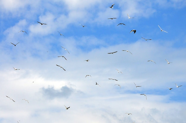 多くの白いカモメが曇りの青い空を飛ぶ