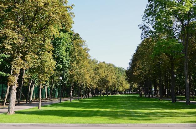 Зеленые и оранжевые деревья в красивом парке. цветочный и природный осенний пейзаж