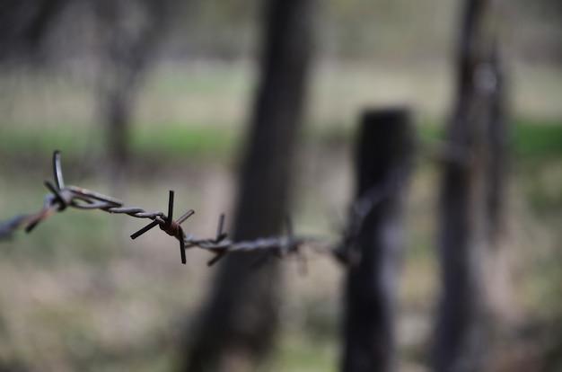 背景をぼかした写真の古くてさびた有刺鉄線の要素のマクロ撮影。
