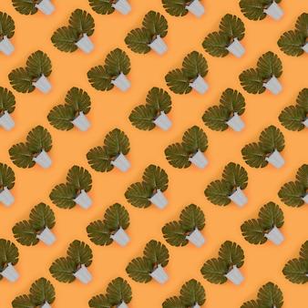 Тропическая пальма монстера уходит в пастельные ведра по цвету. плоская планировка с модным минимальным рисунком. вид сверху