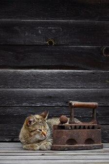 厚い猫が木の表面に重くてさびた古い石炭鉄の隣に位置