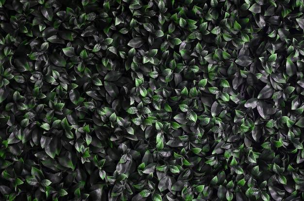 緑色のツタが壁に沿って成長します。野生のつるの密な茂みの質感