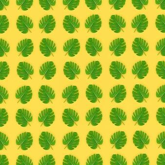 熱帯ヤシのモンステラの葉は黄色にあります