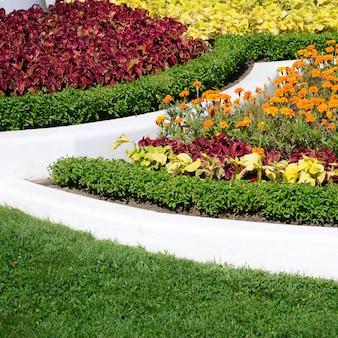 コリウス植木鉢。自然なコリウス植物の葉の美しい視点