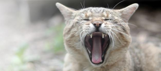 ぼやけた緑の庭にあくび茶色トラ猫