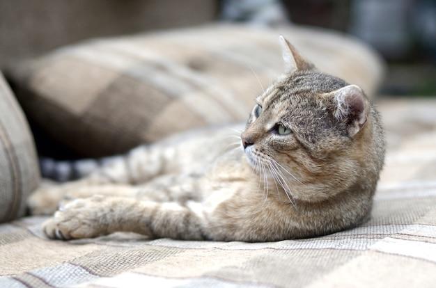 Ленивый полосатый кот дремлет на диване