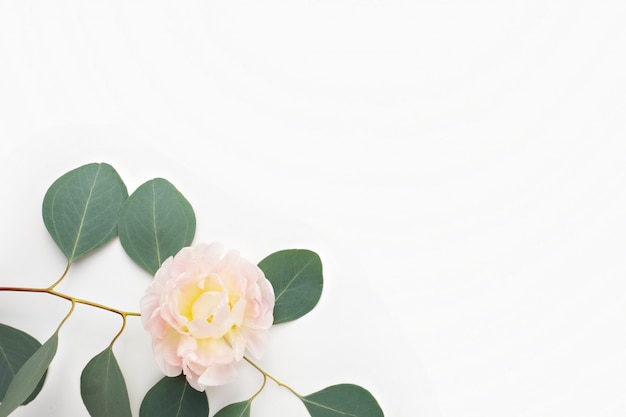 Цветочная композиция. эвкалипт листья и розовые цветы