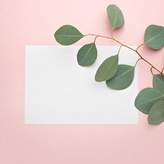 紙の空白、パステルピンクの背景にユーカリの枝