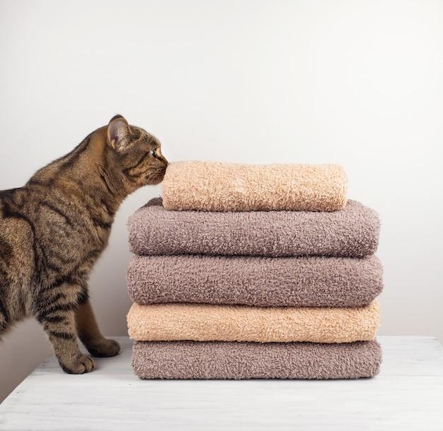 猫はテーブルの上に折り畳まれた新鮮なタオルをスニフ