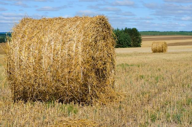 干し草ベール青い空と農村風景。牧草地でわらを収穫