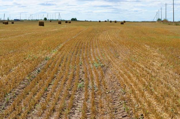 牧草地でわらを収穫します。