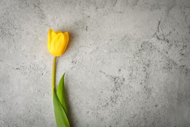 Один ярко-желтый тюльпан на сером фоне.
