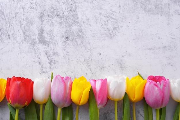 Разноцветные тюльпаны в ряд против светло-серой стены.