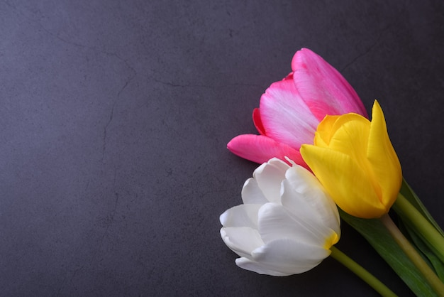 濃い灰色の壁にクローズアップでマルチカラーチューリップの美しい明るい花束。