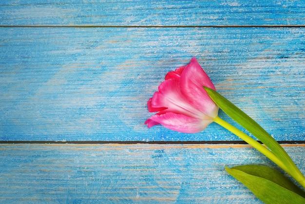 青い木製の板に明るいピンクのチューリップのクローズアップ。