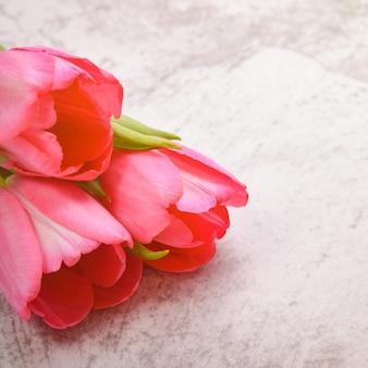 Тюльпаны яркие, свежие, розовые на светло-сером фоне крупным планом.